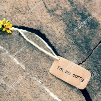 Stock Photo Sorry Background With Yellow Tiny Flower On Old Cement Wall I M So Sorry Text Is Message When Make 445220788 E1505270525418